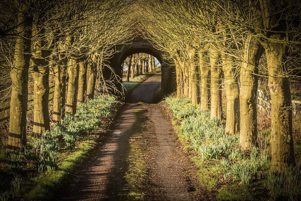 Road by Rick McEvoy Dorset Photographer