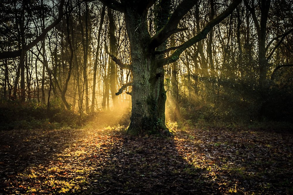 Picture of a tree in Delph Woods, Poole, Dorset