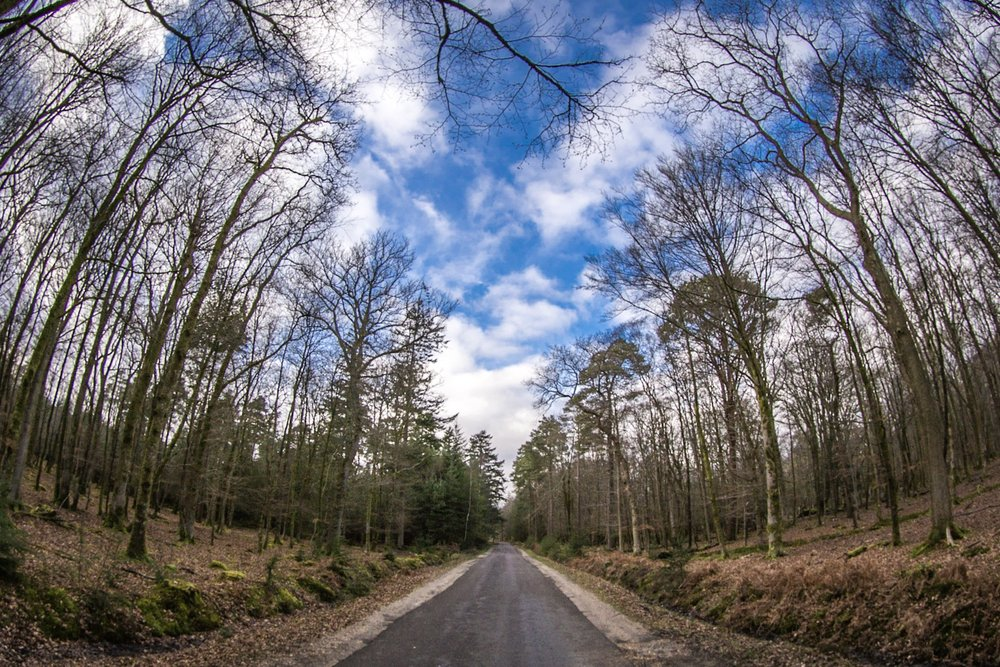 Road in the forest by Rick McEvoy Hampshire Photographer