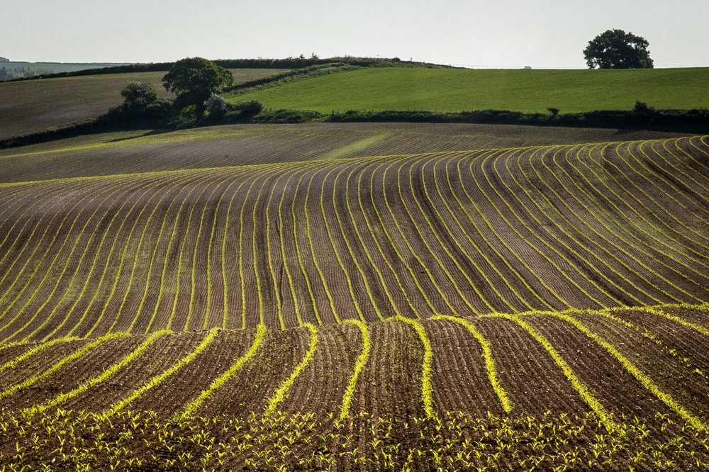 Field by Dorset Photographer Rick McEvoy