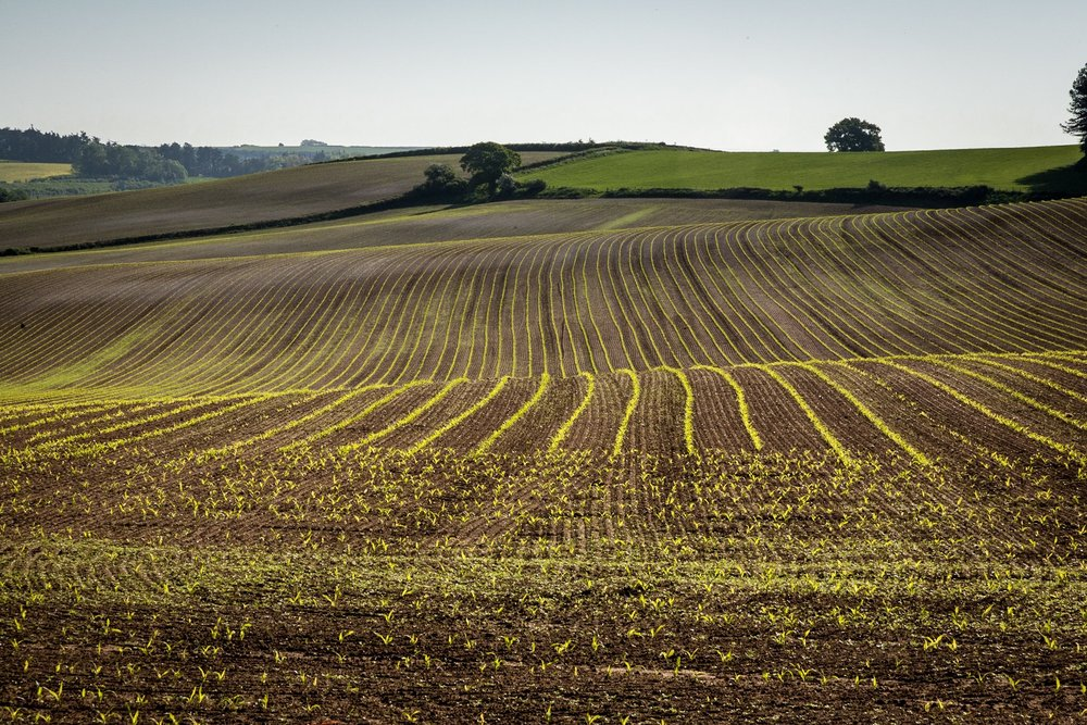 Picture of a field near Dorchester