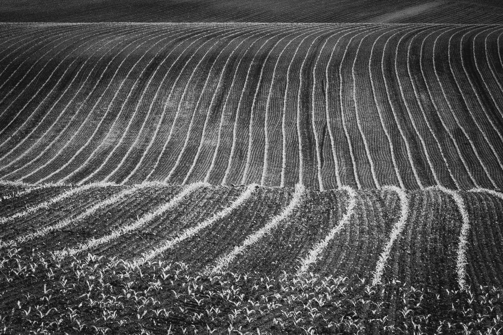 Black and white picture of a field by Rick McEvoy Dorset Photographer