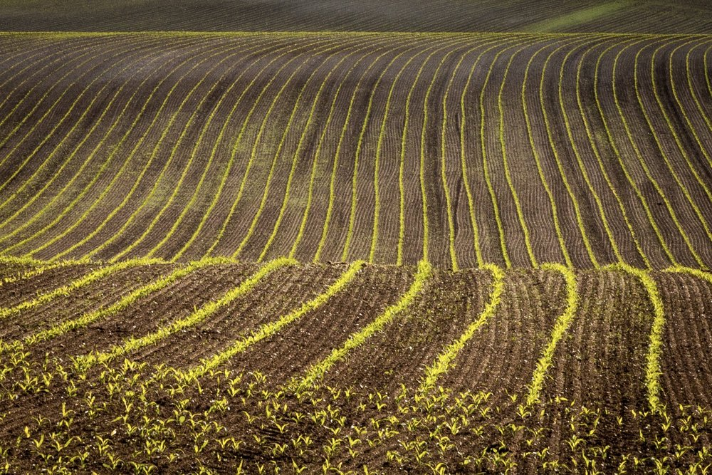 Fields near Puddletown Forest by Rick McEvoy - Dorset Photographer