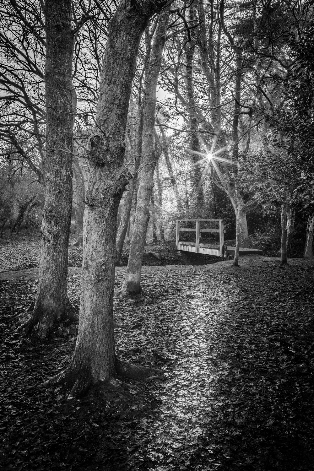 Delph Woods 014 301216-HDR-Edit-Edit.jpg
