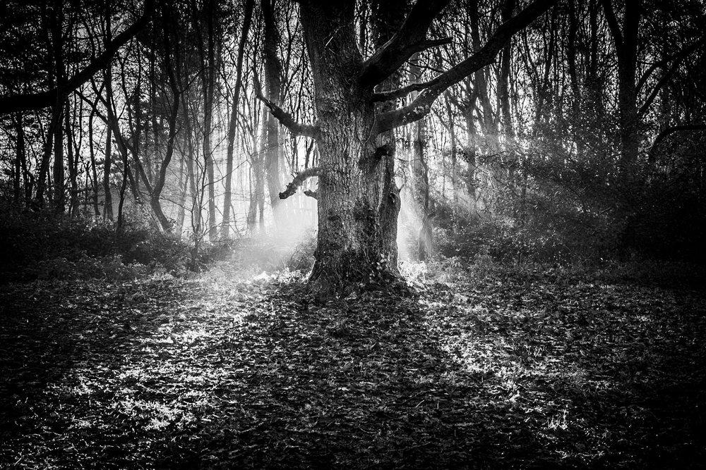 Fine art photography in Dorset by Rick McEvoy