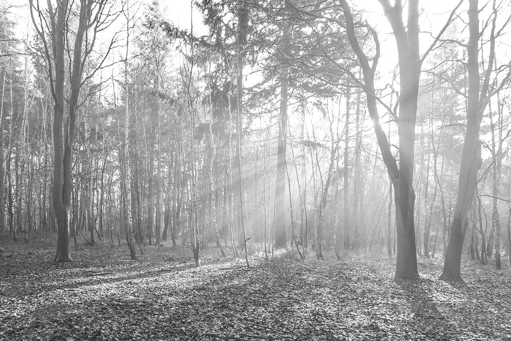 Black and white picture of Misty sunshine at The Vyne by Rick McEvoy Hampshire Photographer