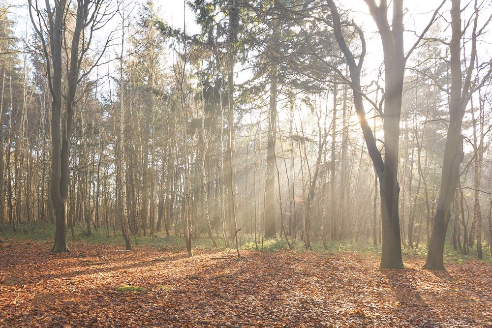 Sunlight in the woods - The Vyne - landscape photography in Hampshire by Rick McEvoy