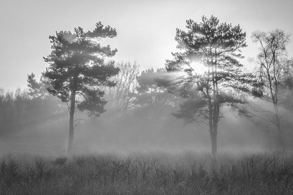 Trees. Poole. Mist. Sun. Nice!