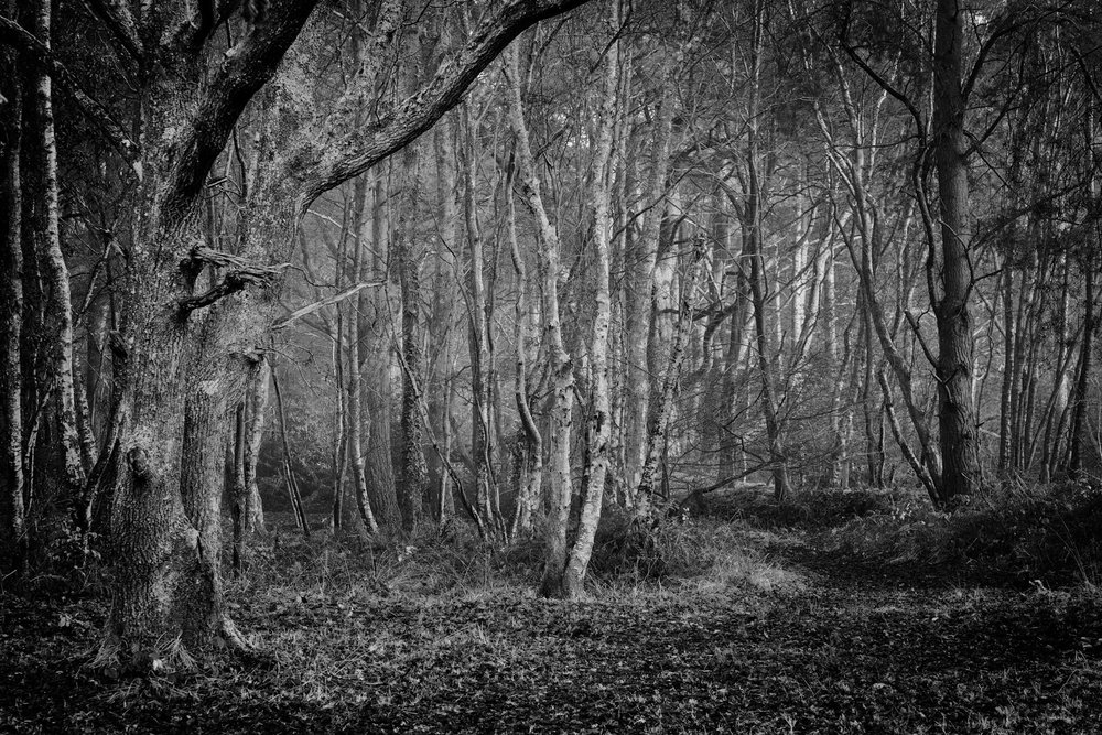 Picture of the mysterious moody Delph Woods by Rick McEvoy black and white landscape photographer
