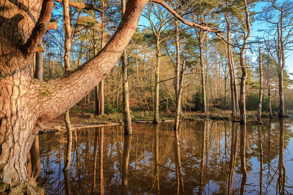 Delph Woods, Poole - fine art photography in Dorset