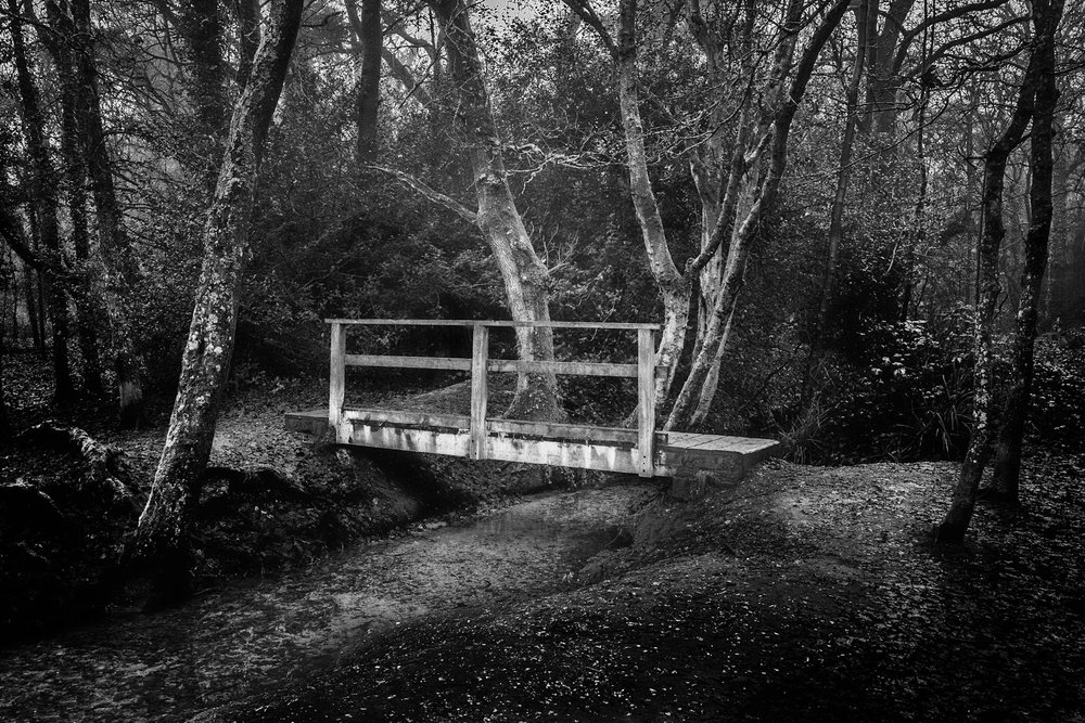 The footbridge in the woods. Delph Woods. Poole. Dorset.