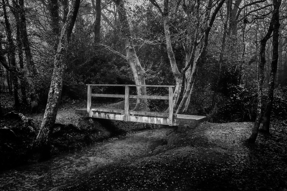 The alternative edit of the picture of the bridge in the woods. Poole. Dorset.