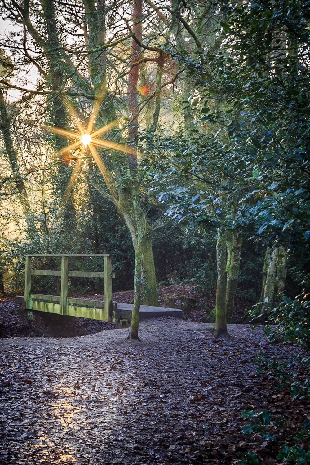 Footbridge in the woods illuminated by the sunshine