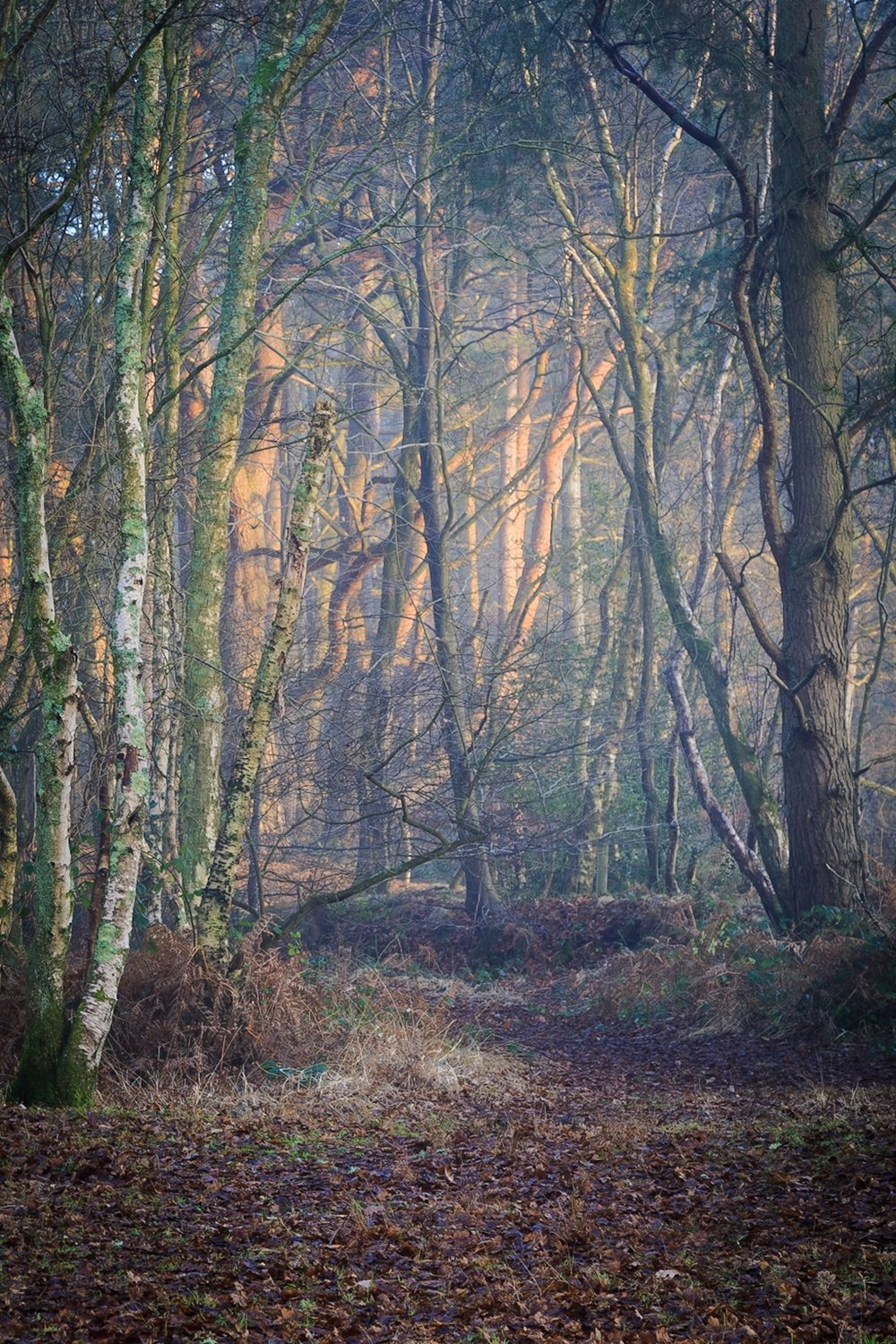 Dramatic moody lighting in the woods - landscape photography in Dorset by Rick McEvoy