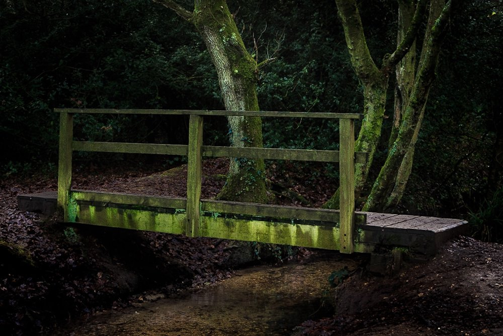 The crop of the picture of the footbridge in the woods in Dorset