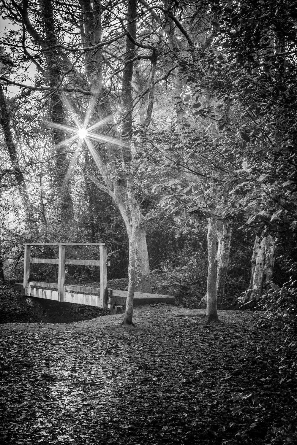 Footbridge in the woods, Poole, Dorset.