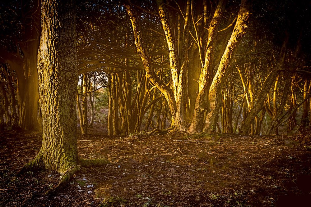Golden sunlight in the New Forest by Rick McEvoy Hampshire Photographer