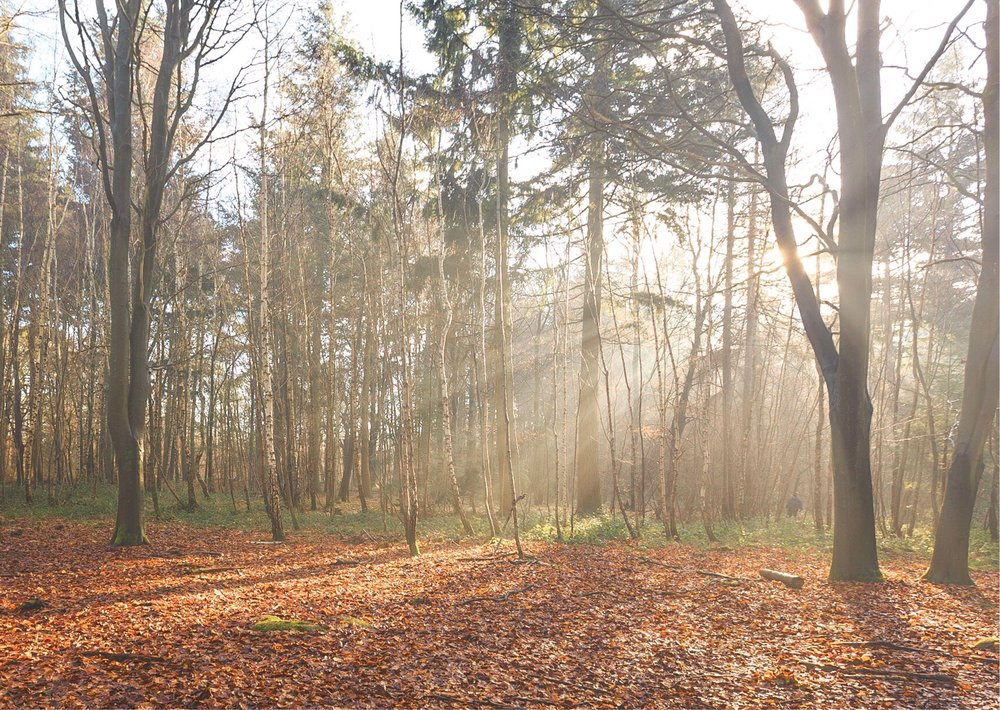 The Vyne, Hampshire - spectacular woods and stunning sunlight