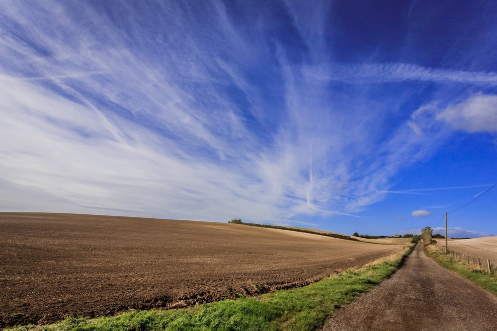 Field near Bere Regis by Dorset Photographer Rick McEvoy