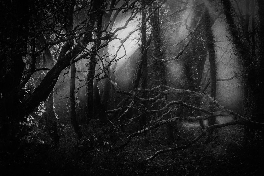 Picture of misty woods in black and white