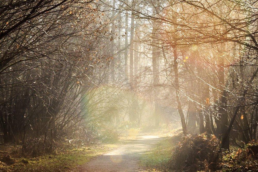 Misty sunshine at The Vyne by landscape photographer Rick McEvoy
