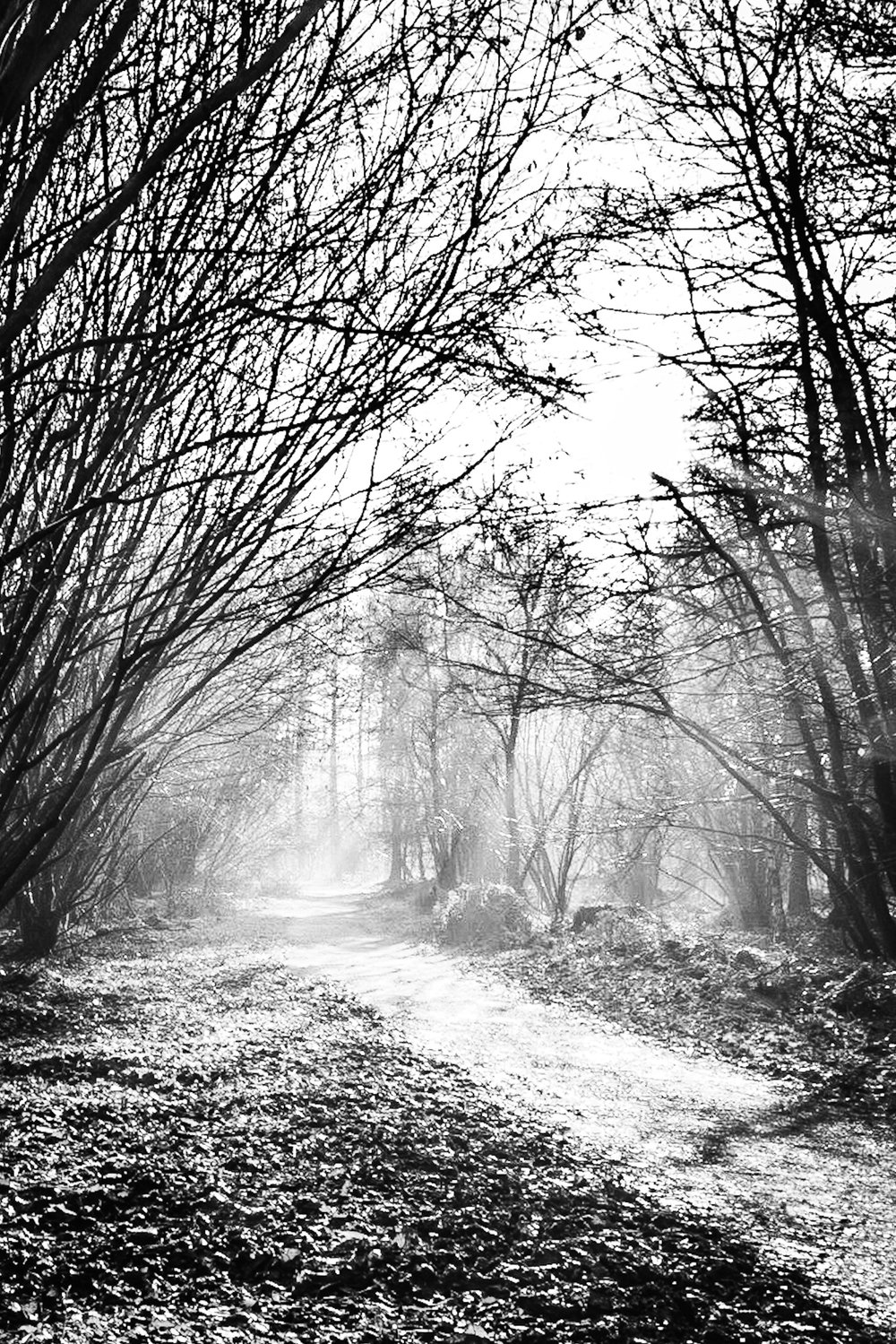Black and white landscape photography in Hampshire