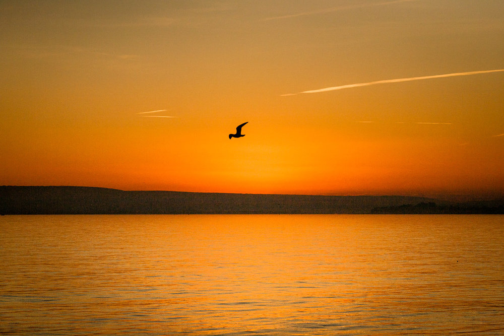 A solitary bird illuminated by the sunset photographed from Bournemouth Beach
