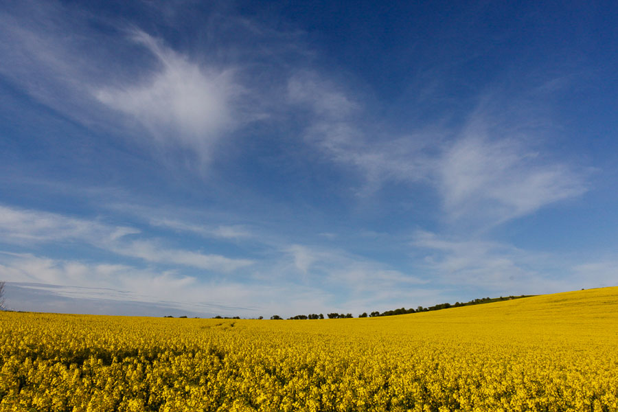 Landscape photography in Dorset by Rick McEvoy Photography