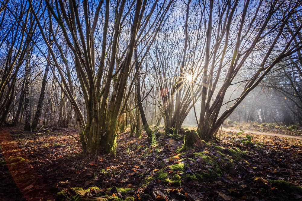 Winter sunshine at The Vyne by Rick McEvoy Hampshire Photographer Rick McEvoy