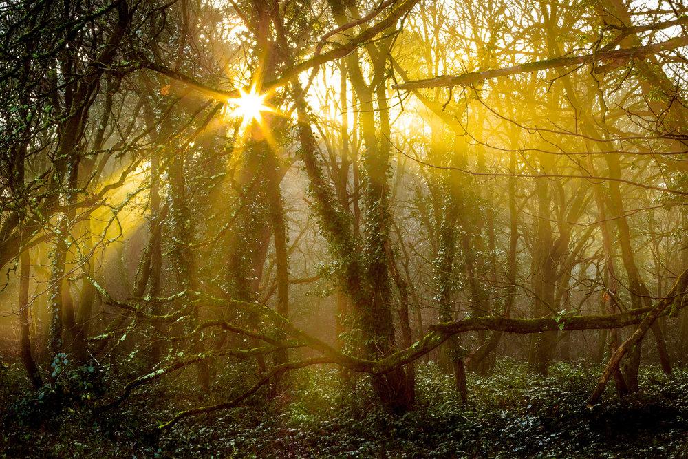 Delph Woods in Poole, Dorset