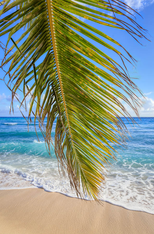 Palm Leaf on Dover Beach Barbados