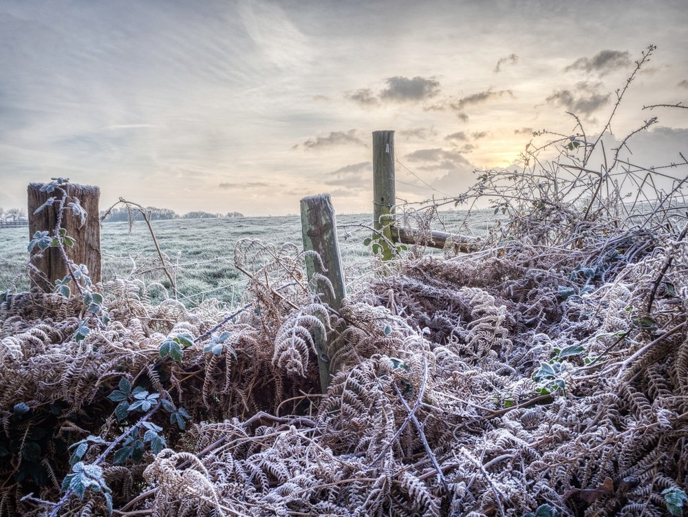 Winter scene in Dorset
