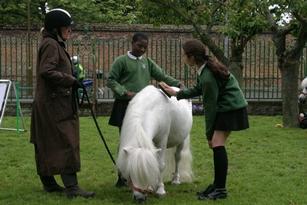 jump ahead at john roan horse petting