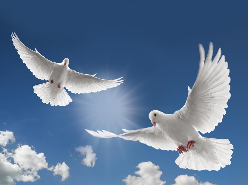 Dove-Flyer.jpg