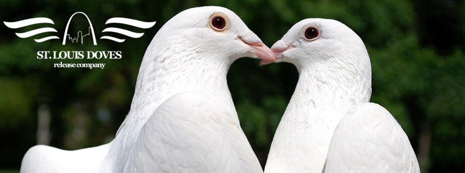 funeral white dove starting at only 179 00 st louis doves