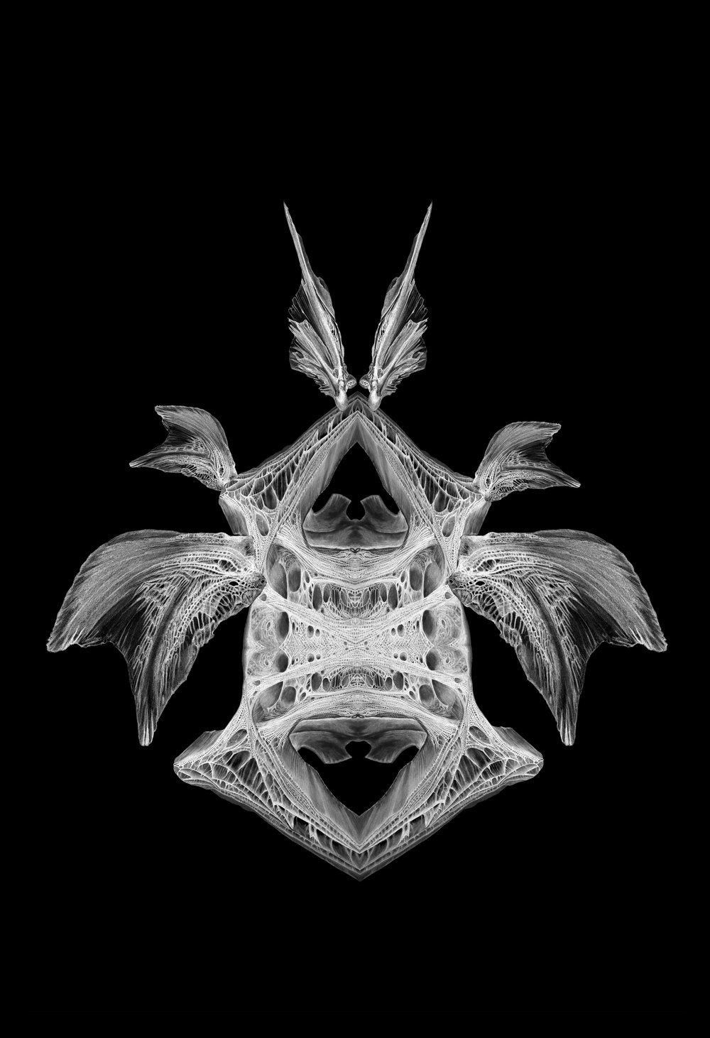 X-Ray of Diaboli Minimus.  2016 Digital collage from original drawings.         Courtesy of the artist Price: $600