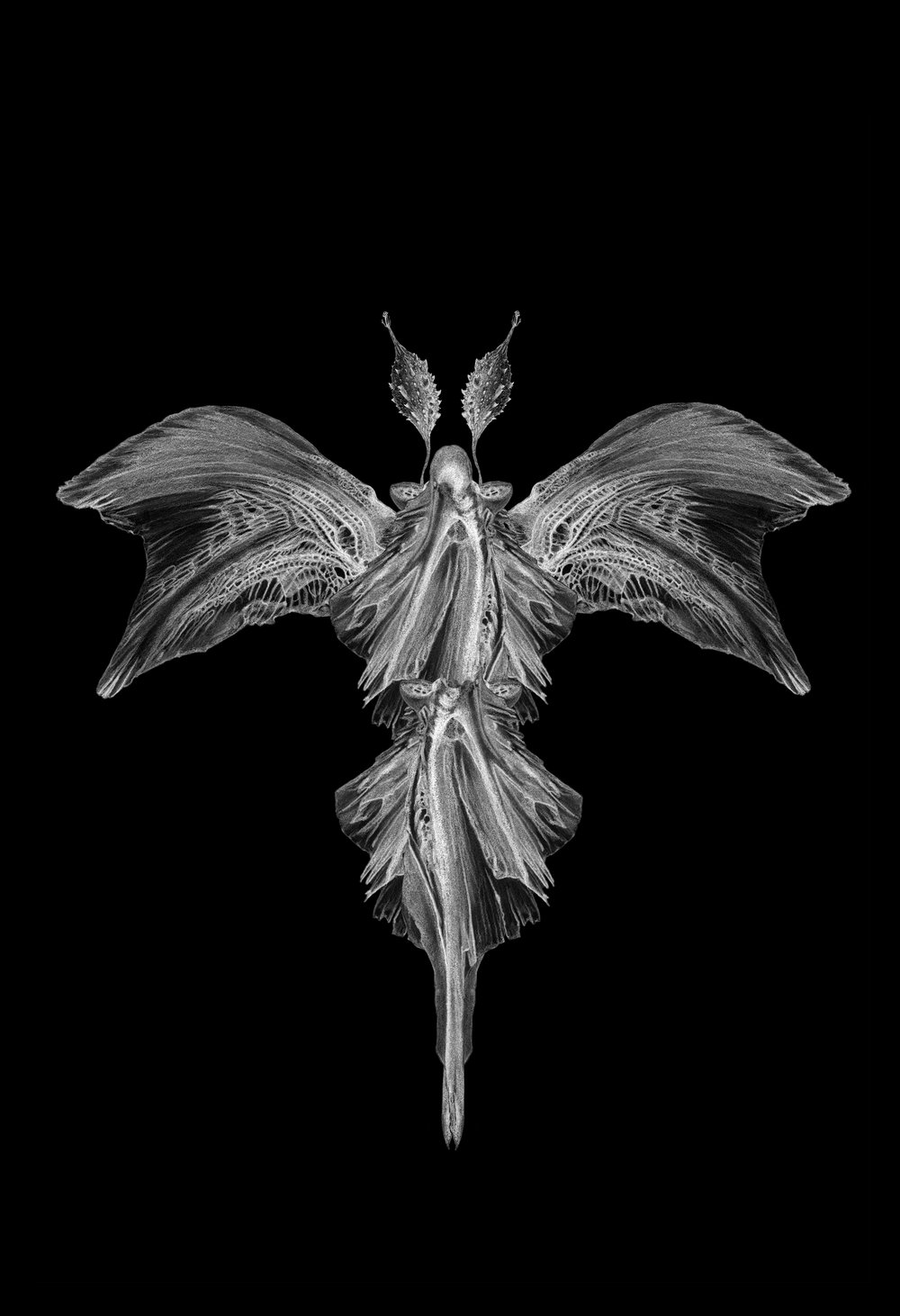 X-Ray of Darner Incognita . 2016 Digital collage from original drawings.         Courtesy of the artist Price: $600