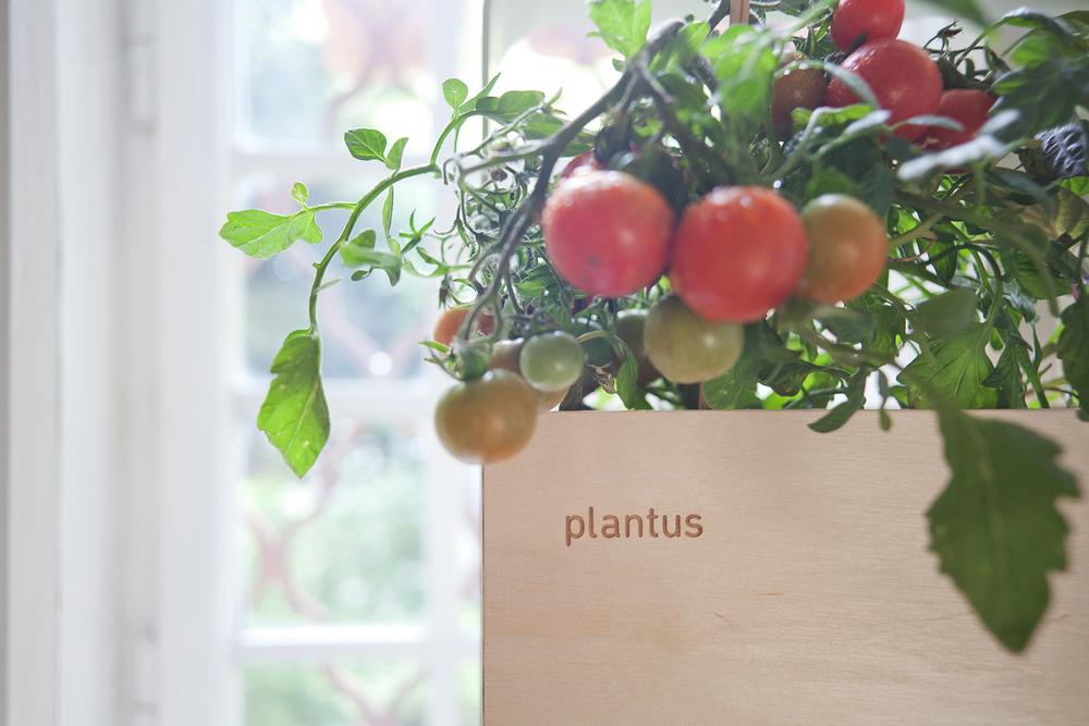 Indoor urban gardening - Plantus planters 01.jpg