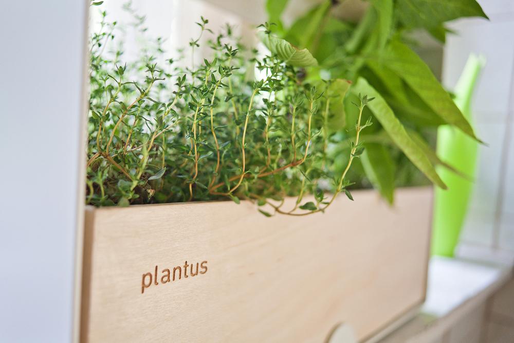 Indoor urban gardening - Plantus planters 03.jpg