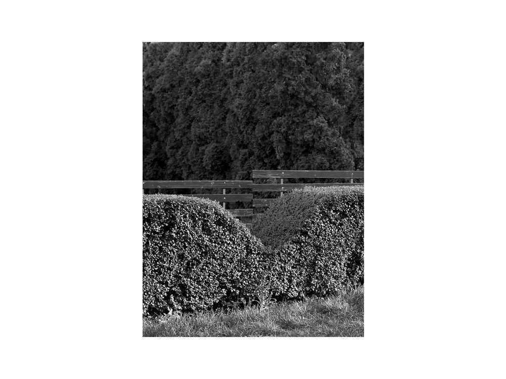 hellodesign-PLANTING-DISTANCE-2.jpg