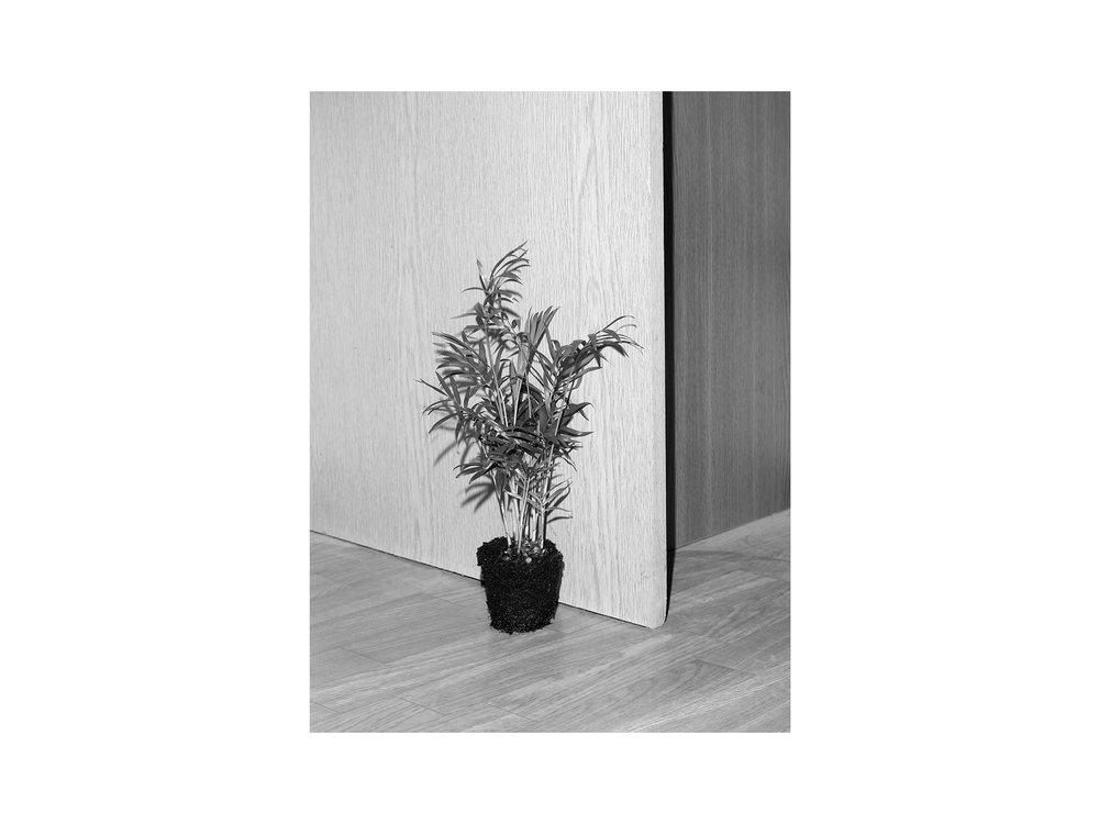 hellodesign-PLANTING-DISTANCE-4.jpg