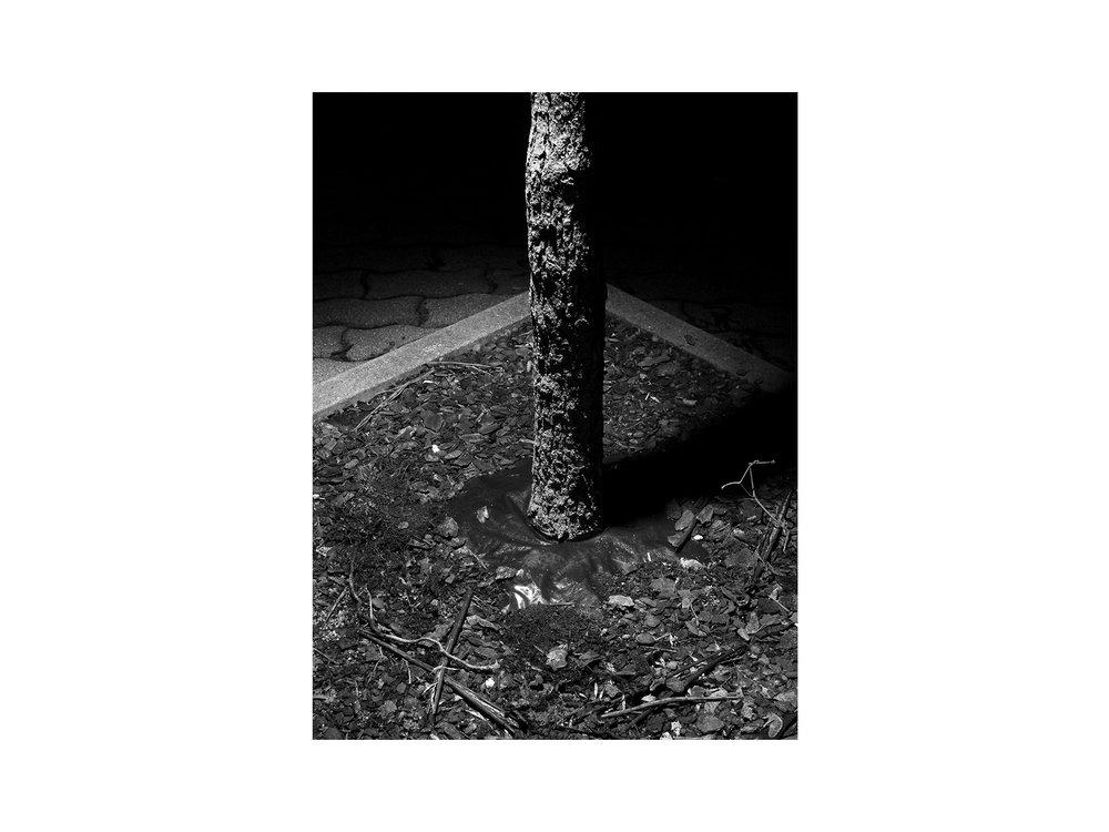 hellodesign-PLANTING-DISTANCE-5.jpg