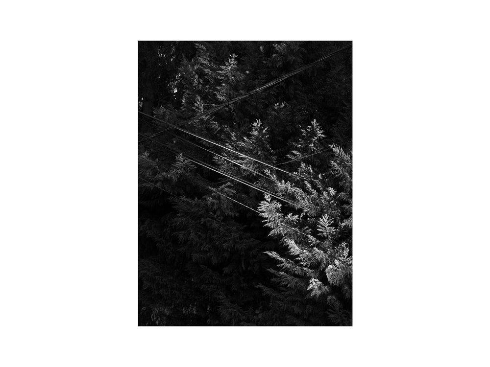 hellodesign-PLANTING-DISTANCE-8.jpg