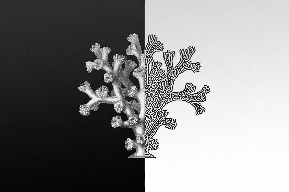 hellodesign-fragment-06.jpg