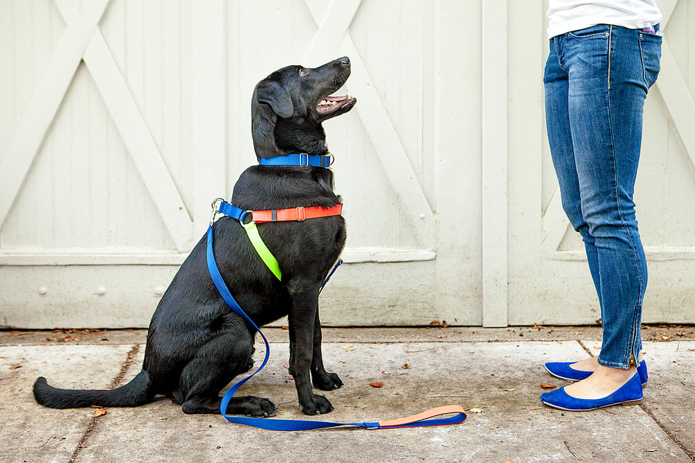 WARE of the DOG || Neon Nylon Colorblock Harness, Collar & Lead