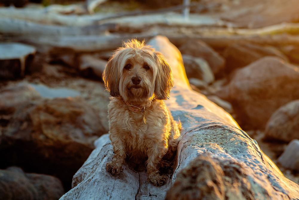 FOUND MY ANIMAL | Indigo Ombre Collar + FOUND MY ANIMAL | Best Friends Charm
