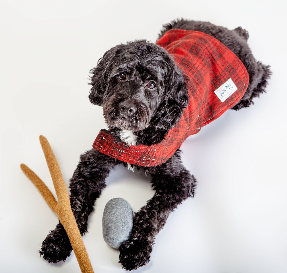 DOG & CO. | Cool Paw Luc & Bones