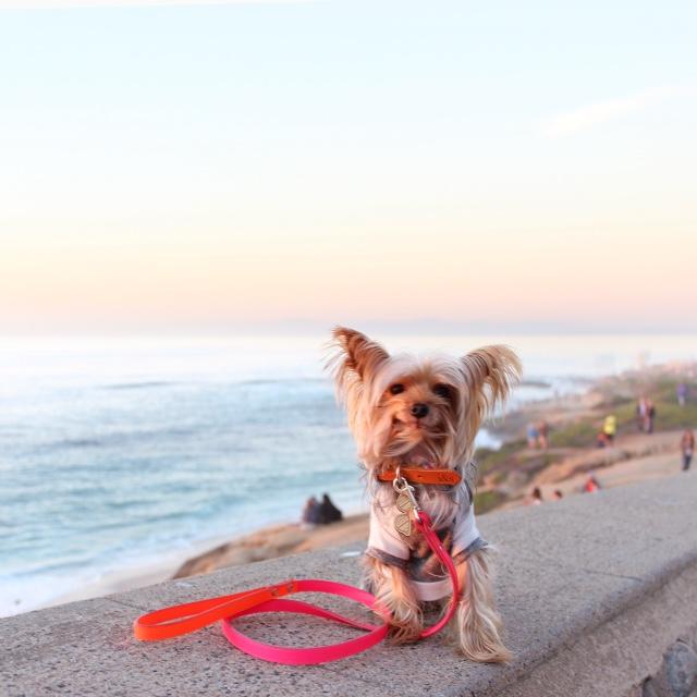 IKE & STELLA | Neon Denim Collar + WARE of the DOG | Neon Colorblock Lead