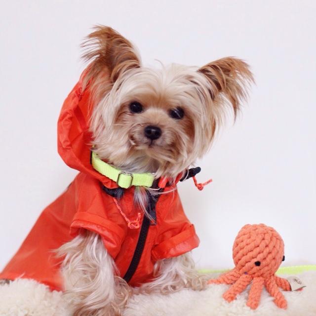 WAGWEAR | Rainbreaker Jacket + WARE of the DOG | Nylon Colorblock Collar + JAX & BONES | Elton the Octopus