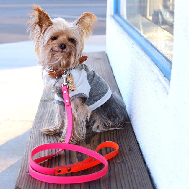 PENN + POOCH | Babe T-Shirt + CROPSCOTCH | Sunglasses Dog Tag